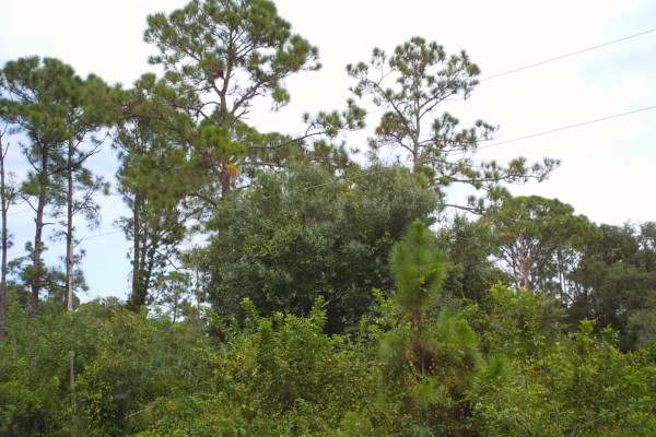 1.25 Acres for Sale in Clewiston, FL