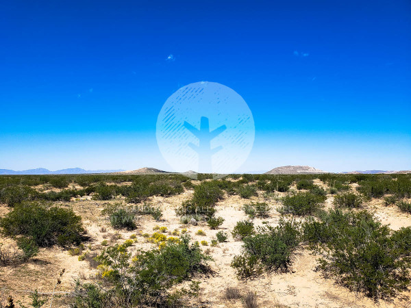 Land for Sale in Agua Dulce, TX
