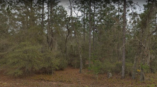 10 Lots for Sale in Interlachen, FL