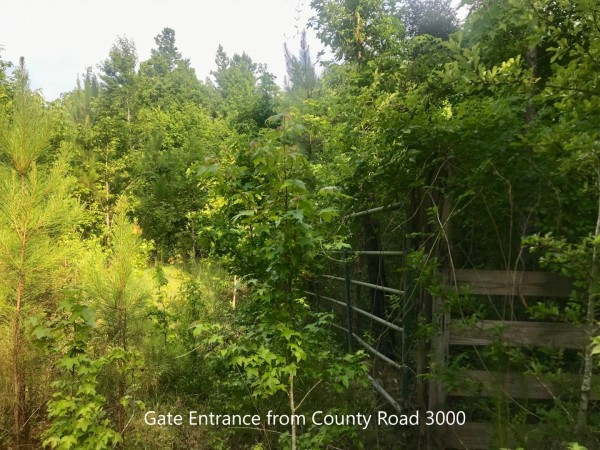 2.8 Acres for Sale in Woodville, TX