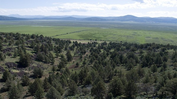 19.5 Acres for Sale in Madeline, CA