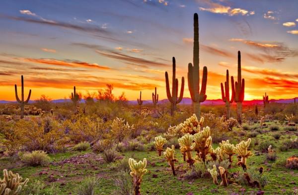 1.04 Acres for Sale in Holbrook, AZ