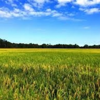 0.25 Acres for Sale in Fordyce, AR