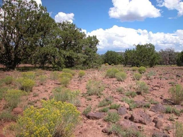 40.68 Acres for Sale in Saint Johns, AZ