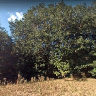0.29 Acres for Sale in Summerfield, FL