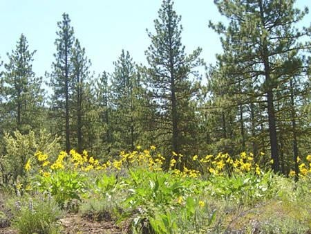 0.92 Acres for Sale in Alturas, CA