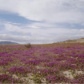 20 Acres for Sale in Niland, CA