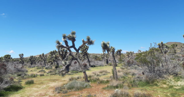 5 Acres for Sale in Yucca Valley, CA