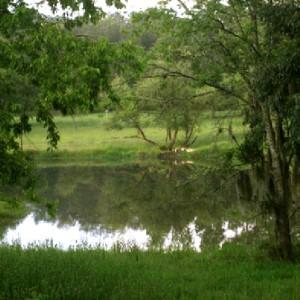 0.11 Acres for Sale in Fort Mccoy, FL
