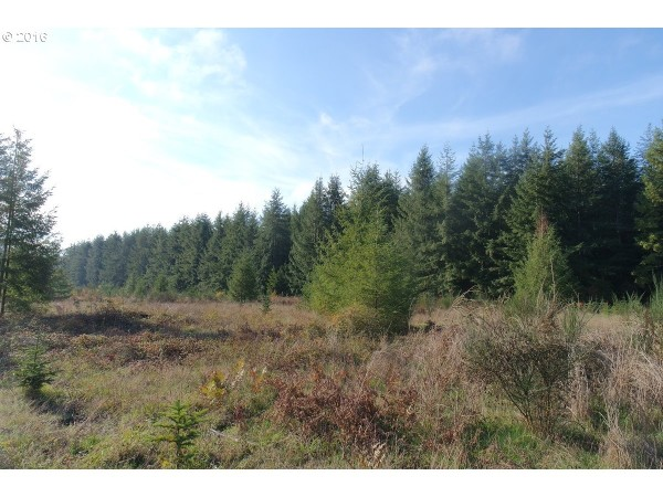 Land for Sale in Rochester, WA
