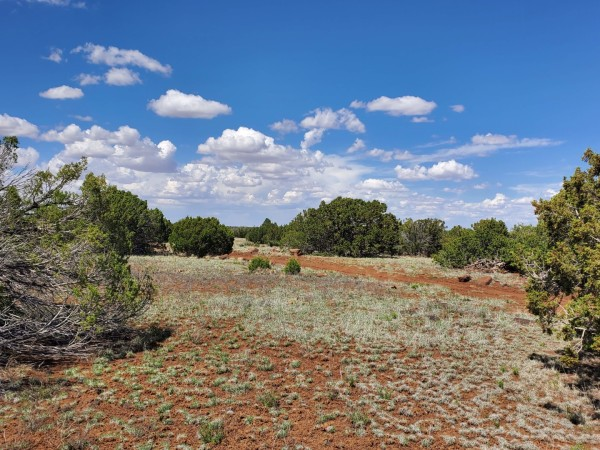 10 Acres for Sale in Concho, AZ