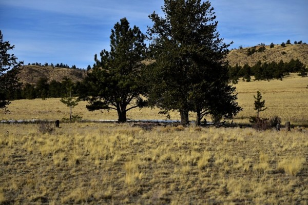 5.02 Acres for Sale in Hartsel, CO