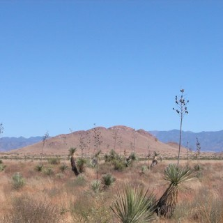 1.65 Acres for Sale in Sanders, AZ