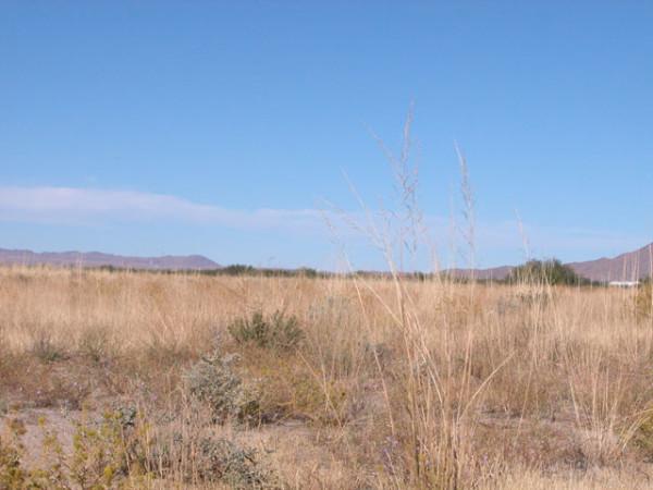 1.19 Acres for Sale in Willcox, AZ