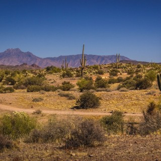 20.66 Acres for Sale in Chloride, AZ