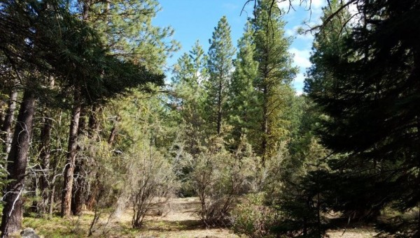2.19 Acres for Sale in Bonanza, OR